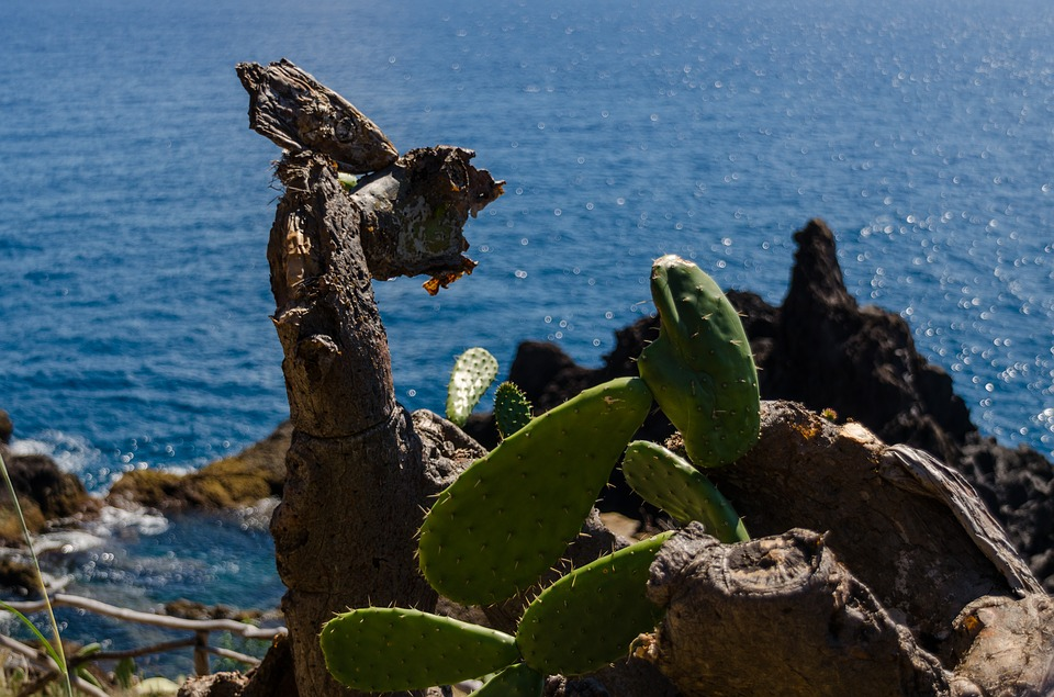 cactus, cliff, sea