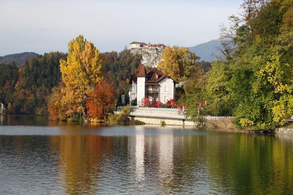 autumn, nature, tree