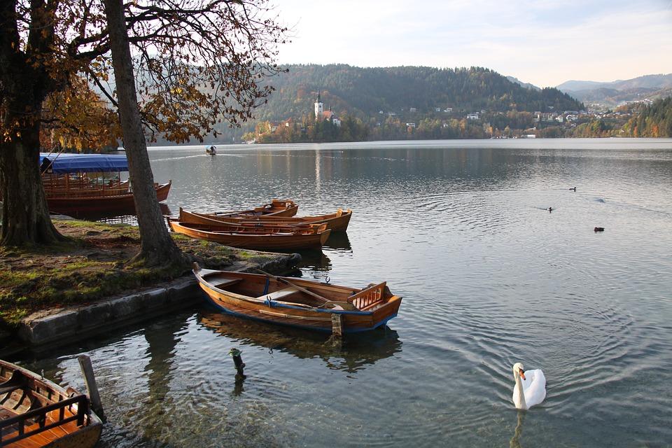 body of water, lake, wood
