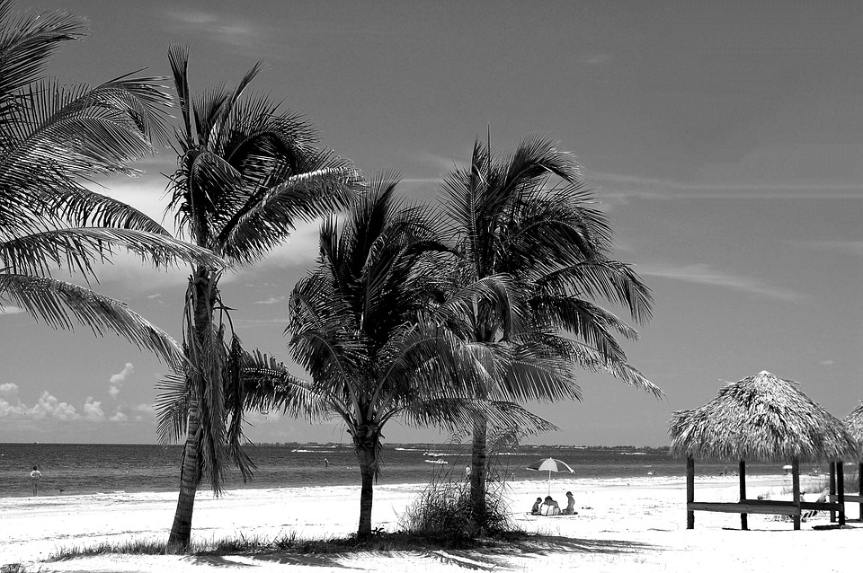 fort myers beach, florida, palm trees