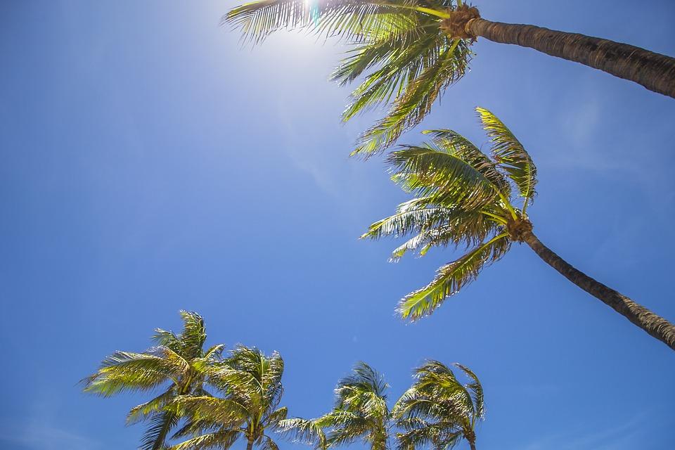 miami, palm trees, summer