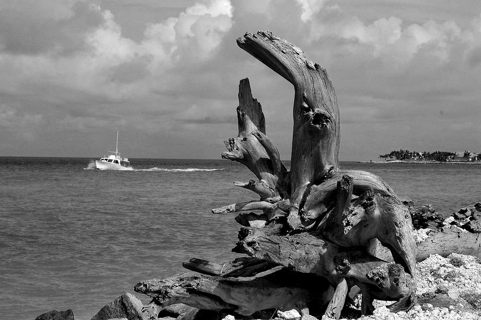 driftwood, landscape, wood