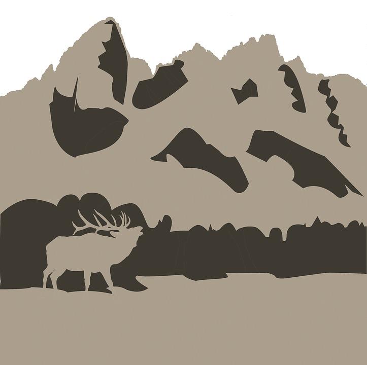 grand tetons, elk, national