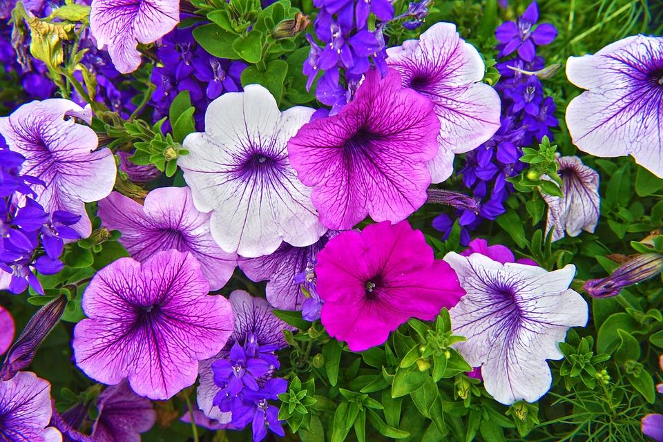 flower, flora, garden