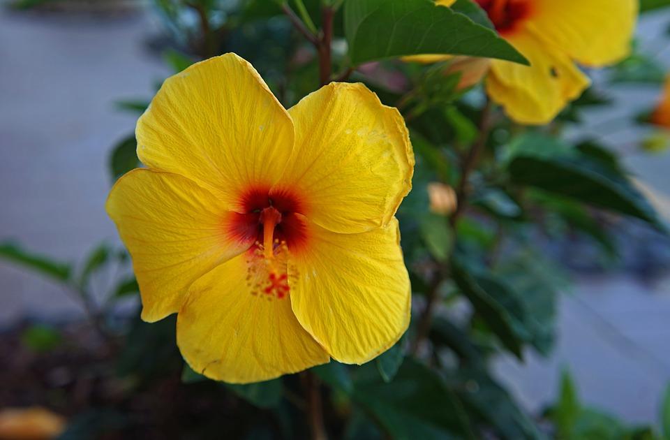 flower, nature, leaf